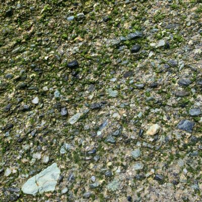 Rocky ground with green moss growing