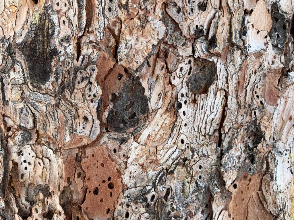 Rich layers of white, brown and black tree bark