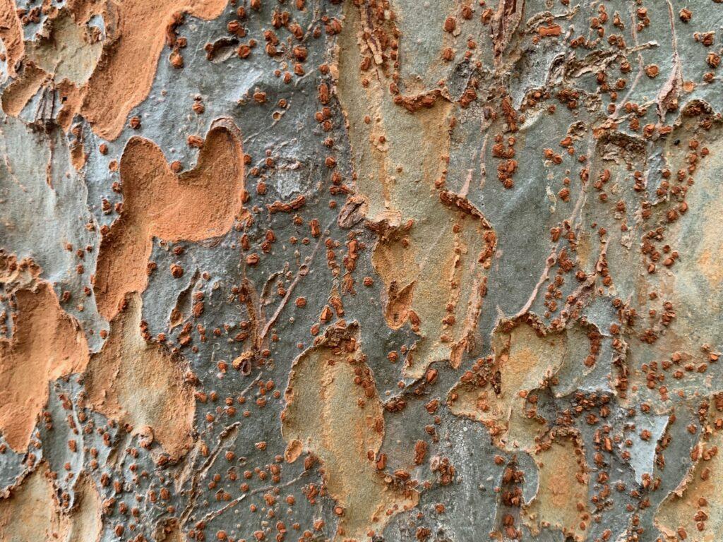 Flaking gray bark over soft brown felt like texture